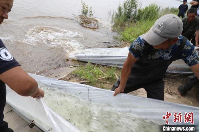 黑龙江省2610万尾鱼苗放流松花江系12年来数量最多